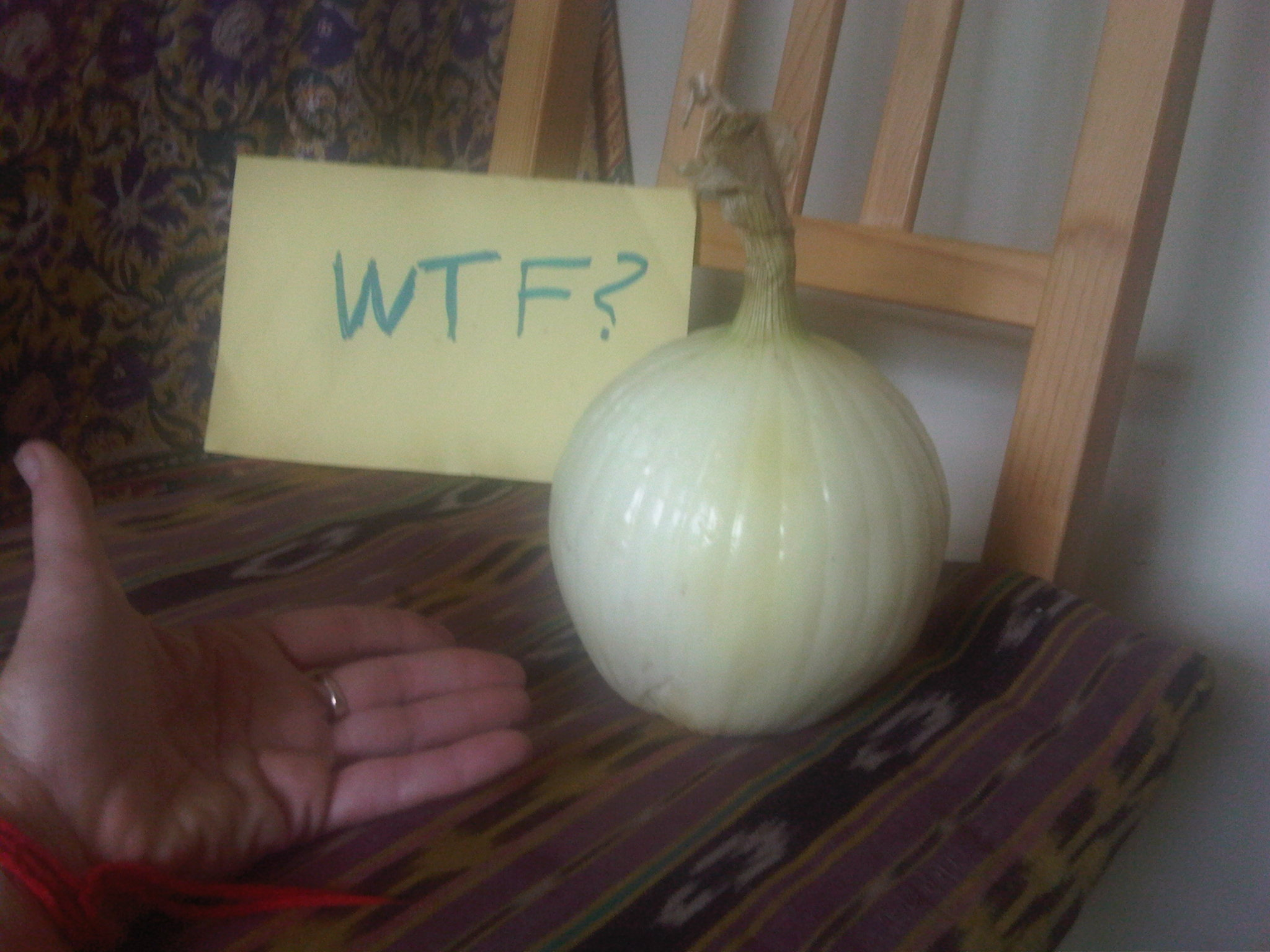 Bigass.onion