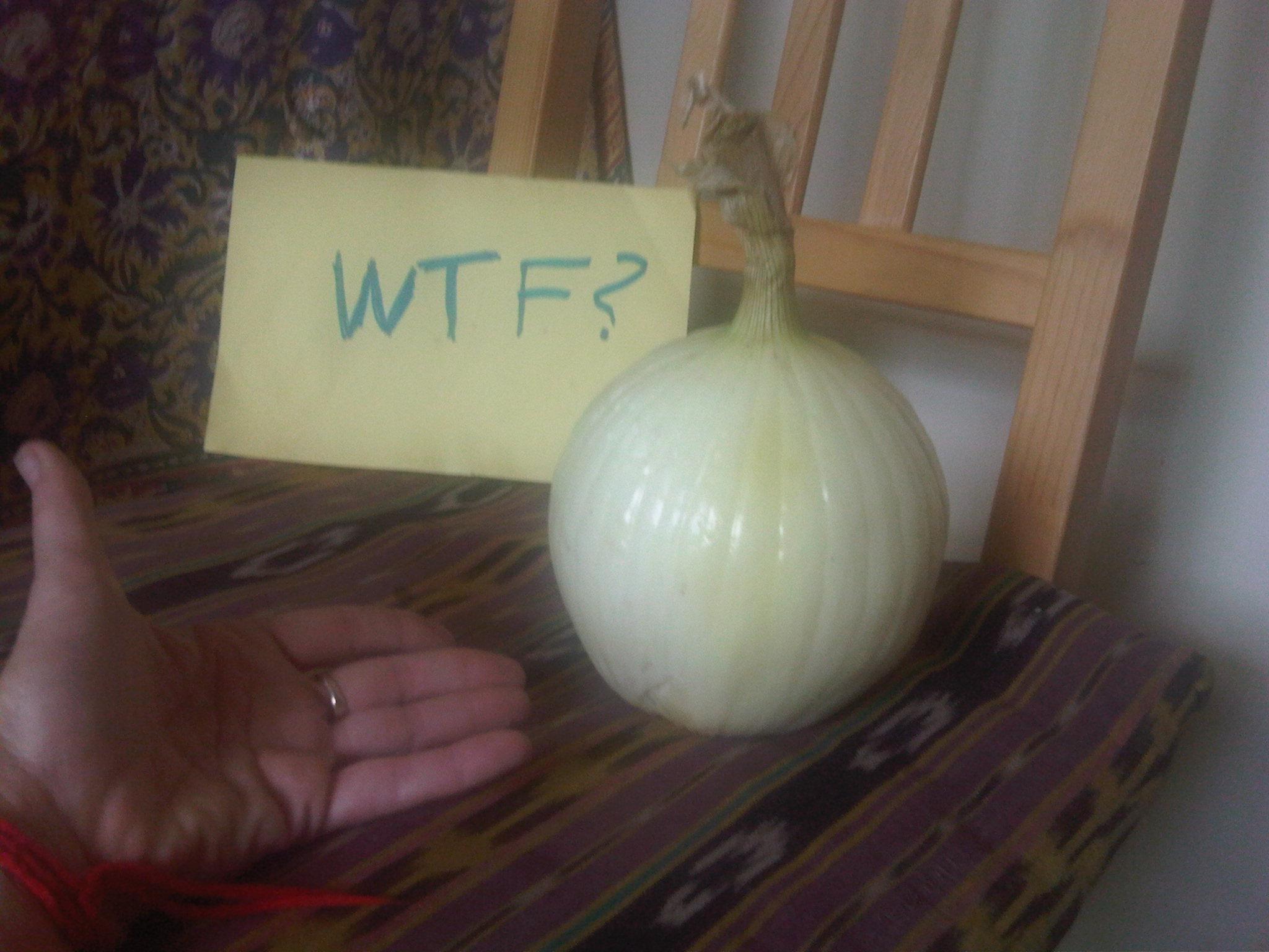 Bigass.onion