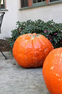 big ass pumpkins