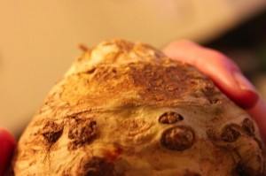 the horrific root vegetable known as celery root